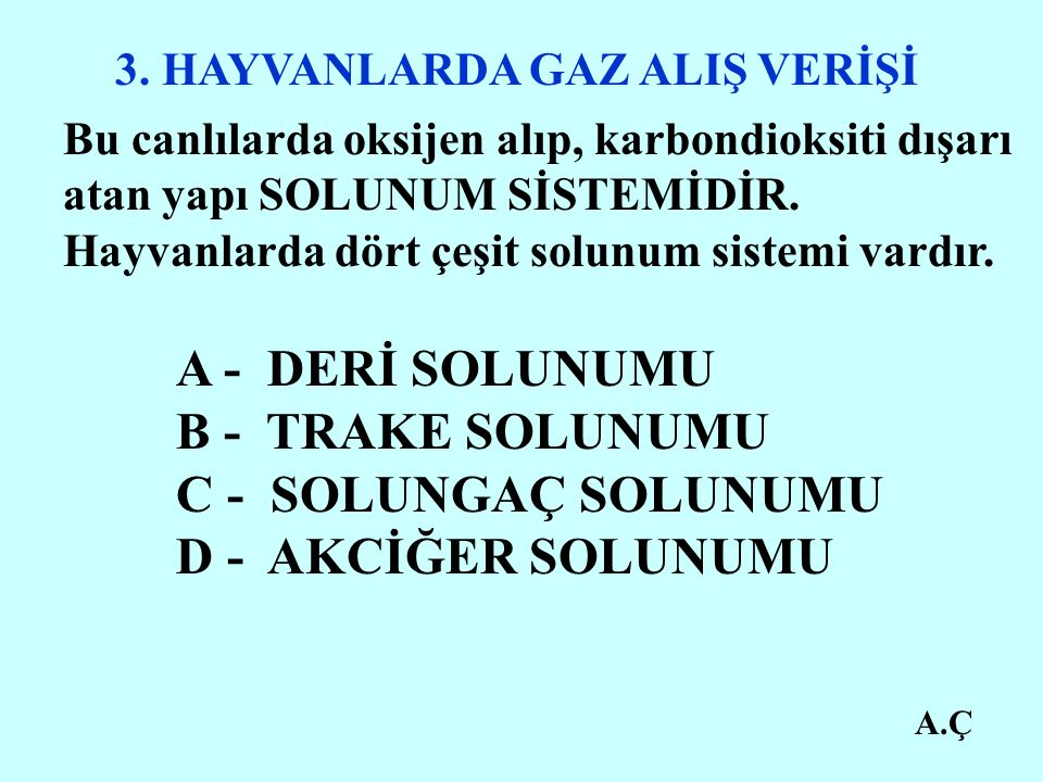 A - DERİ SOLUNUMU B - TRAKE SOLUNUMU C - SOLUNGAÇ SOLUNUMU