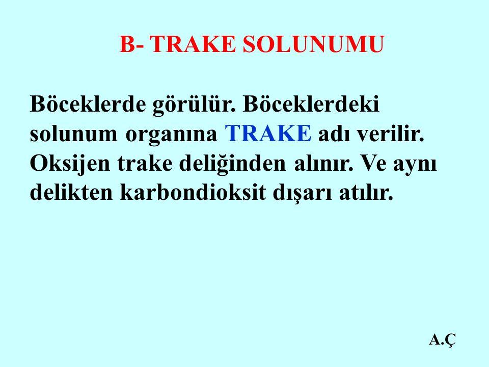 B- TRAKE SOLUNUMU