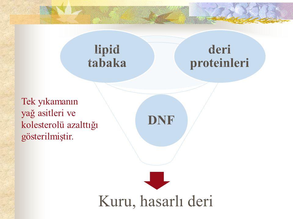 Kuru, hasarlı deri deri proteinleri lipid tabaka DNF Tek yıkamanın