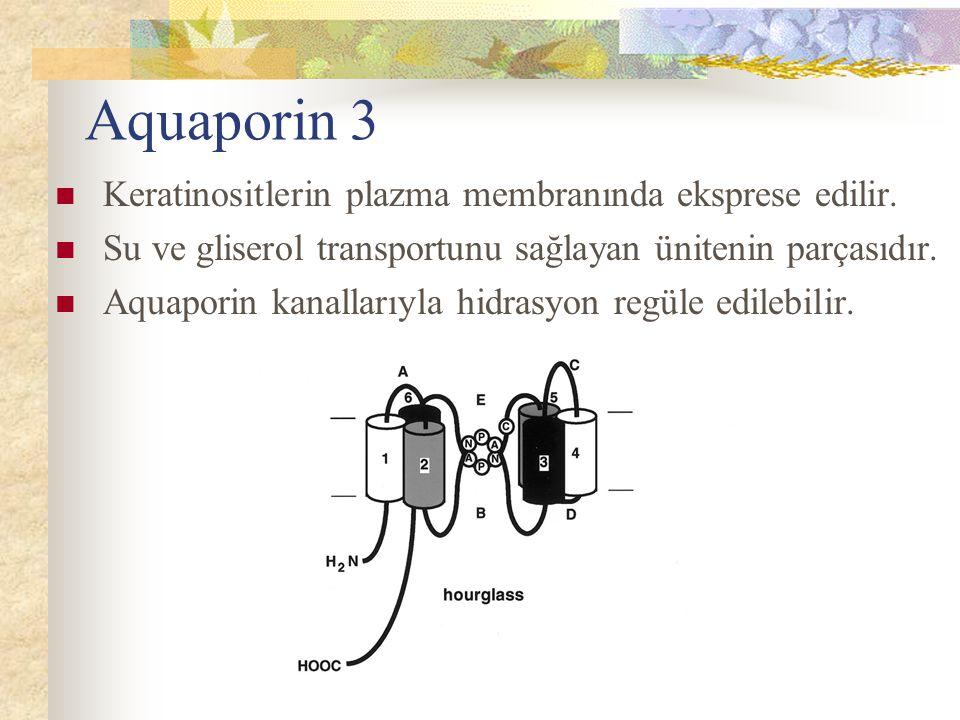 Aquaporin 3 Keratinositlerin plazma membranında eksprese edilir.