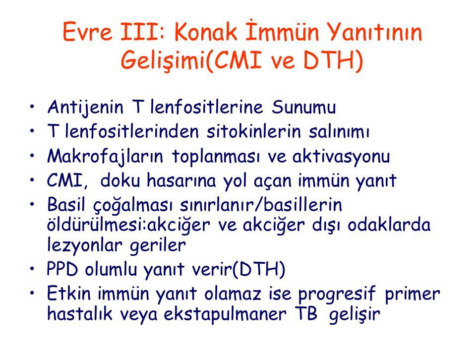 Evre III: Konak İmmün Yanıtının Gelişimi(CMI ve DTH)
