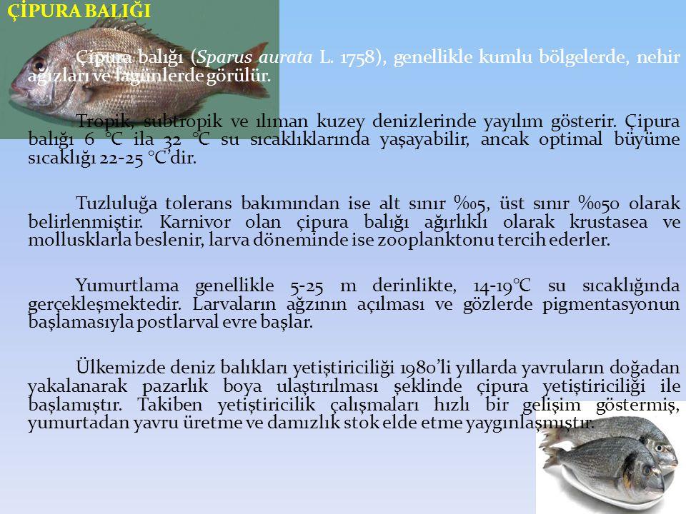 ÇİPURA BALIĞI Çipura balığı (Sparus aurata L. 1758), genellikle kumlu bölgelerde, nehir ağızları ve lagünlerde görülür.