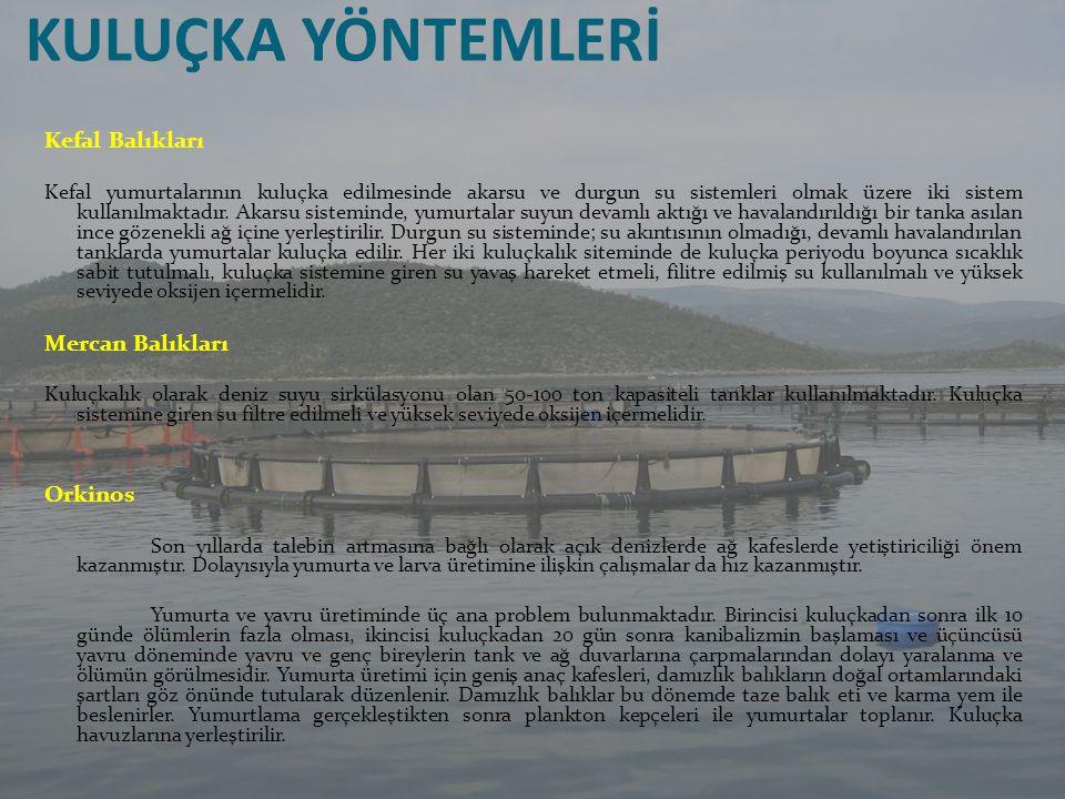 KULUÇKA YÖNTEMLERİ Kefal Balıkları Mercan Balıkları Orkinos