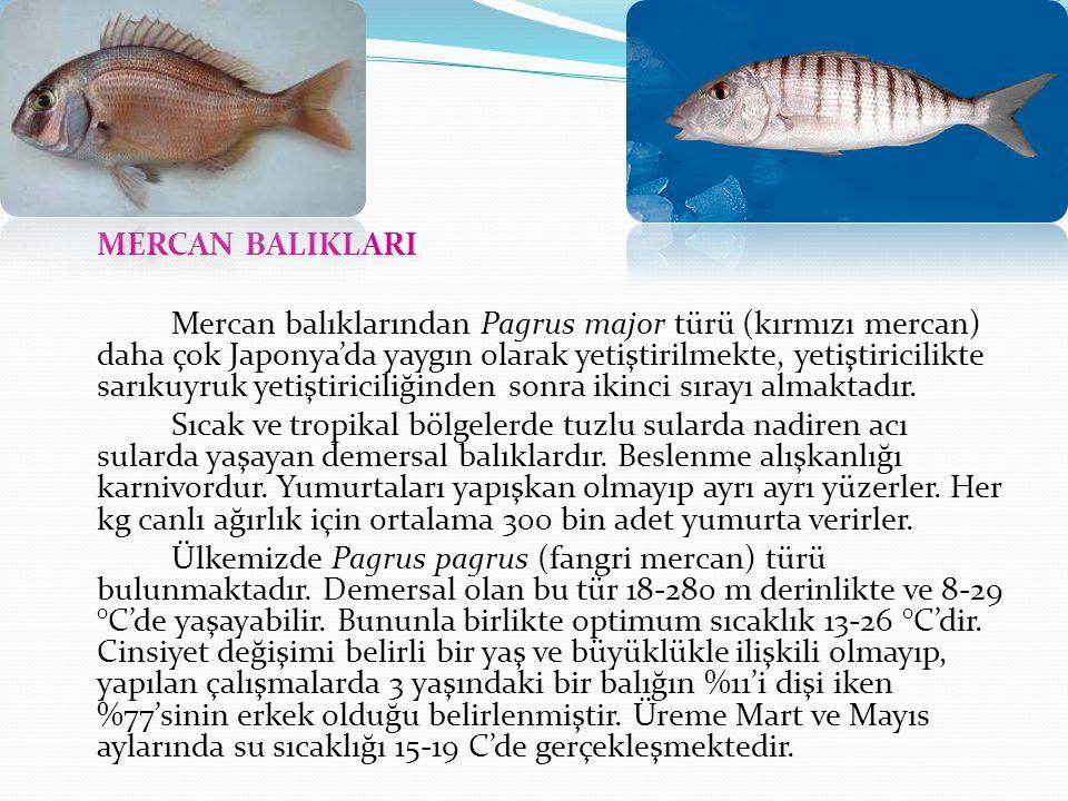 MERCAN BALIKLARI Mercan balıklarından Pagrus major türü (kırmızı mercan) daha çok Japonya'da yaygın olarak yetiştirilmekte, yetiştiricilikte sarıkuyruk yetiştiriciliğinden sonra ikinci sırayı almaktadır.