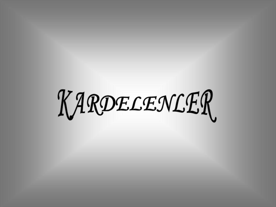 KARDELENLER