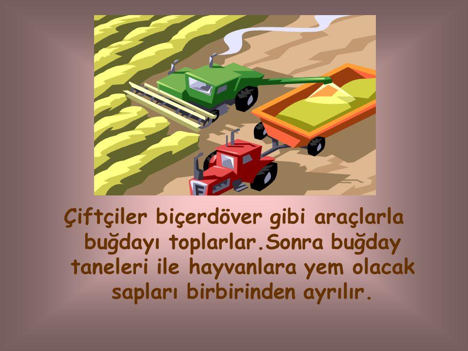 Çiftçiler biçerdöver gibi araçlarla buğdayı toplarlar