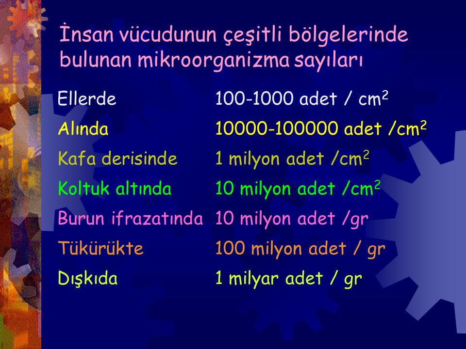 İnsan vücudunun çeşitli bölgelerinde bulunan mikroorganizma sayıları