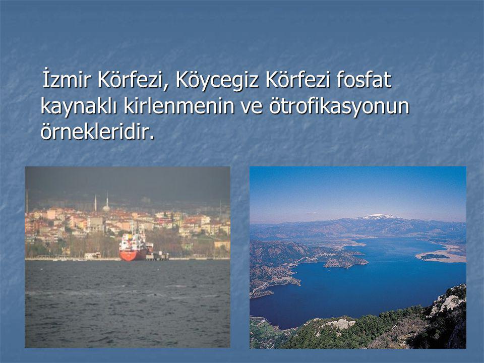 İzmir Körfezi, Köycegiz Körfezi fosfat kaynaklı kirlenmenin ve ötrofikasyonun örnekleridir.