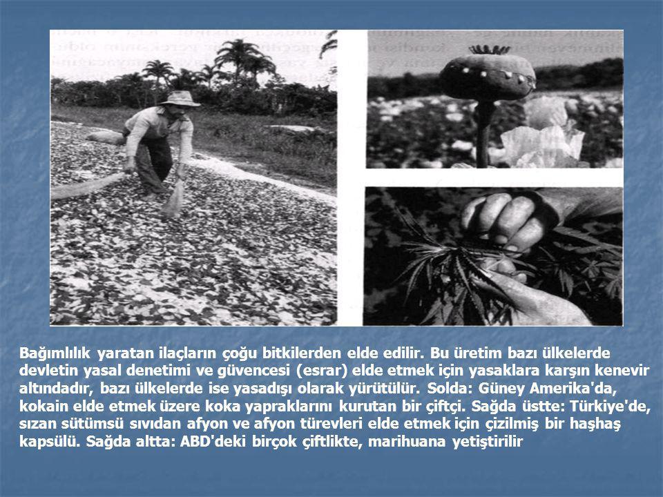 Bağımlılık yaratan ilaçların çoğu bitkilerden elde edilir