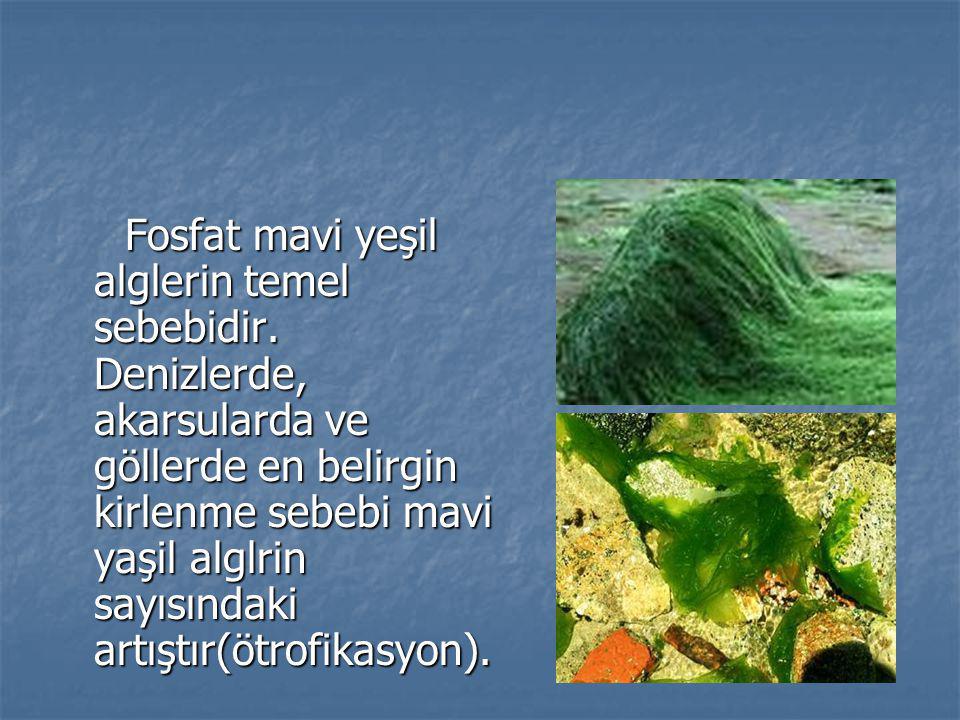 Fosfat mavi yeşil alglerin temel sebebidir