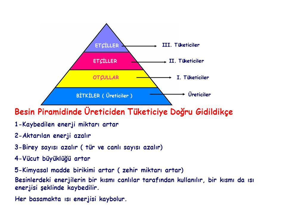 Besin Piramidinde Üreticiden Tüketiciye Doğru Gidildikçe