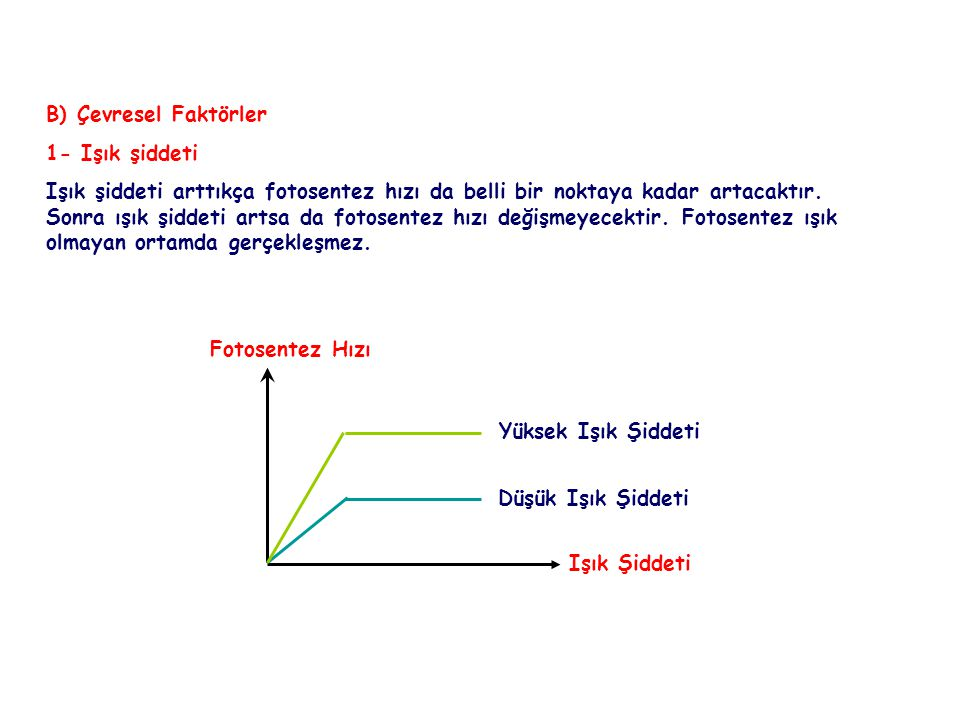 FOTOSENTEZ B) Çevresel Faktörler. 1- Işık şiddeti.