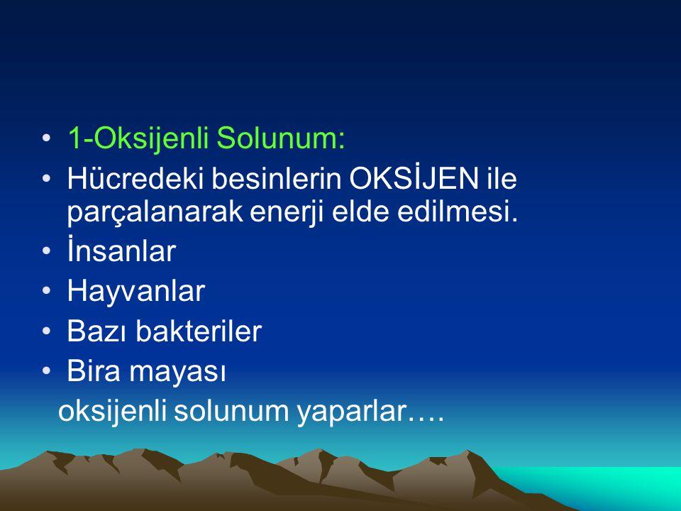 1-Oksijenli Solunum: Hücredeki besinlerin OKSİJEN ile parçalanarak enerji elde edilmesi. İnsanlar.