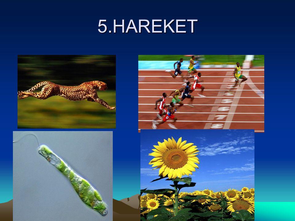 5.HAREKET
