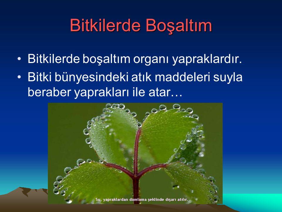 Bitkilerde Boşaltım Bitkilerde boşaltım organı yapraklardır.