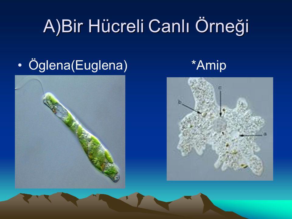 A)Bir Hücreli Canlı Örneği