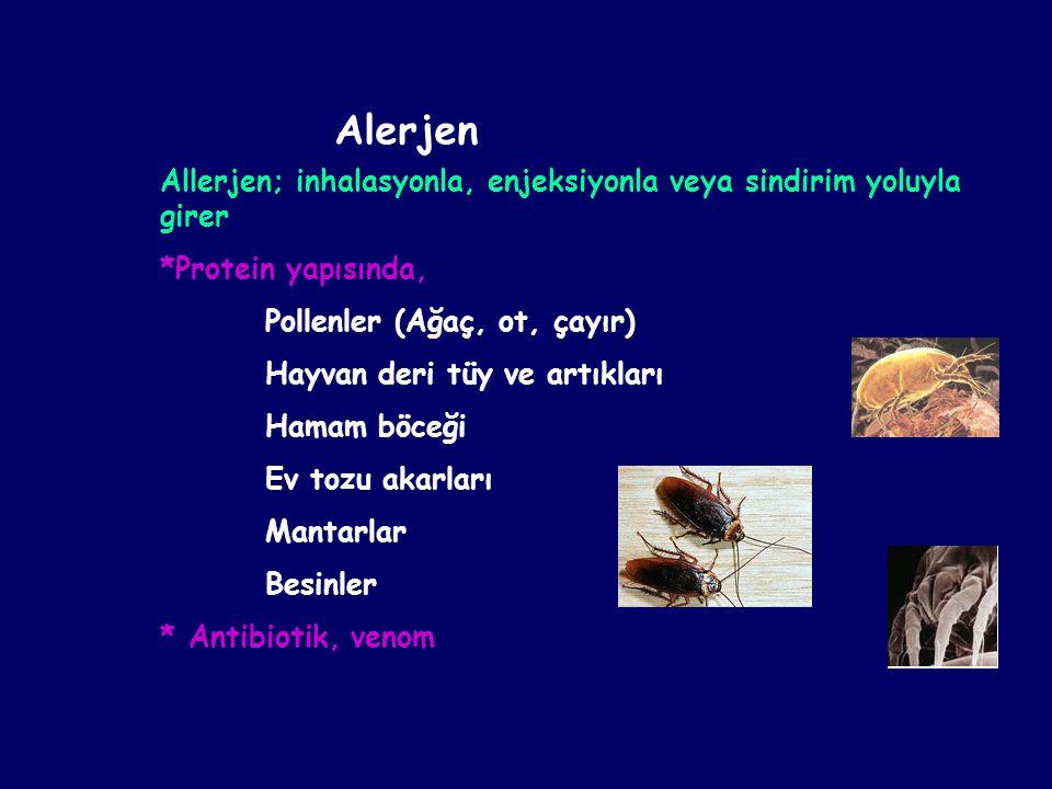Alerjen Allerjen; inhalasyonla, enjeksiyonla veya sindirim yoluyla girer. *Protein yapısında, Pollenler (Ağaç, ot, çayır)