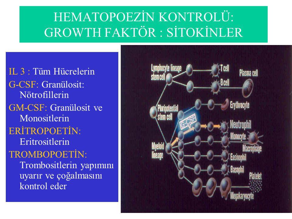 HEMATOPOEZİN KONTROLÜ: GROWTH FAKTÖR : SİTOKİNLER