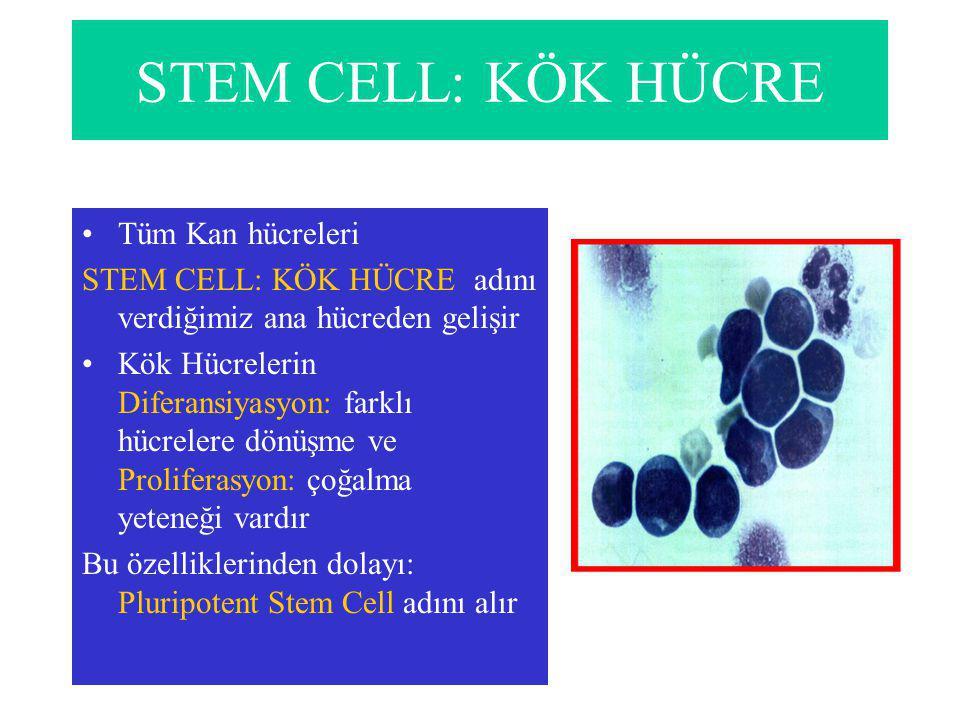 STEM CELL: KÖK HÜCRE Tüm Kan hücreleri