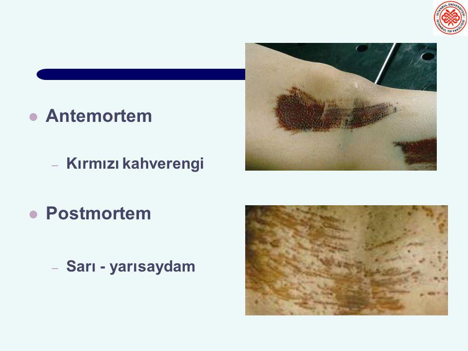 Antemortem Kırmızı kahverengi Postmortem Sarı - yarısaydam