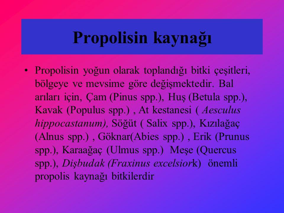 Propolisin kaynağı