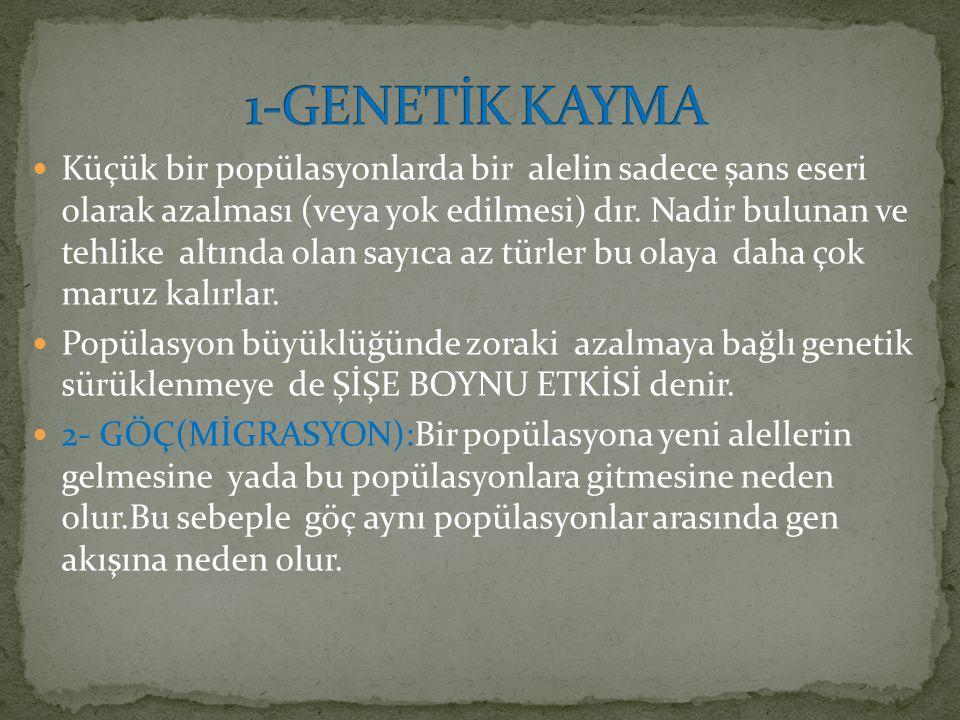 1-GENETİK KAYMA