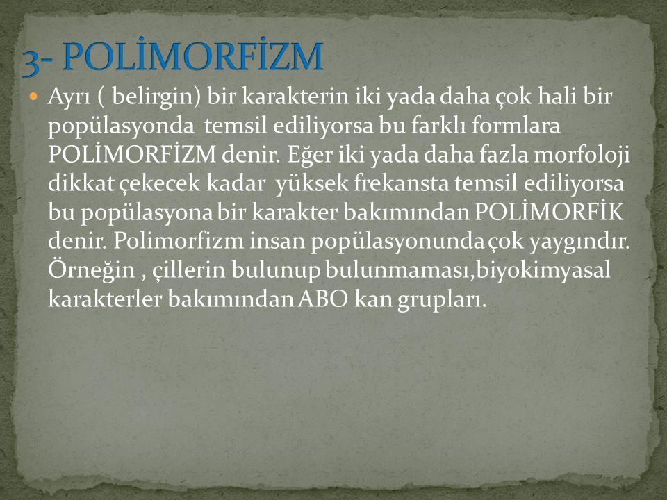 3- POLİMORFİZM