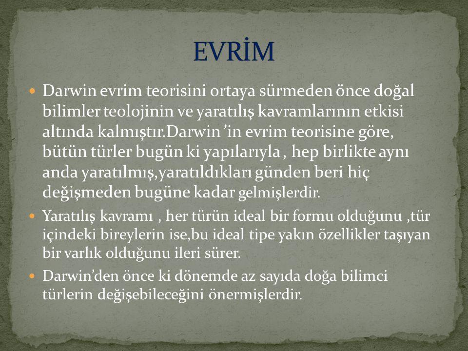 EVRİM