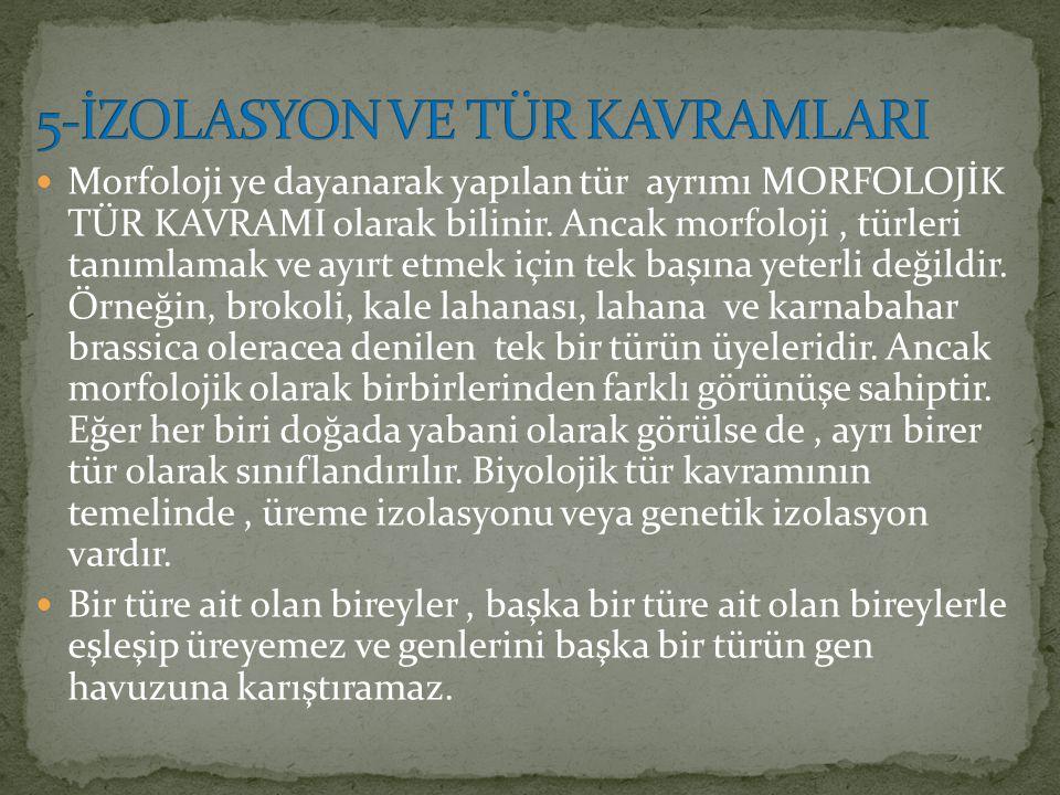 5-İZOLASYON VE TÜR KAVRAMLARI