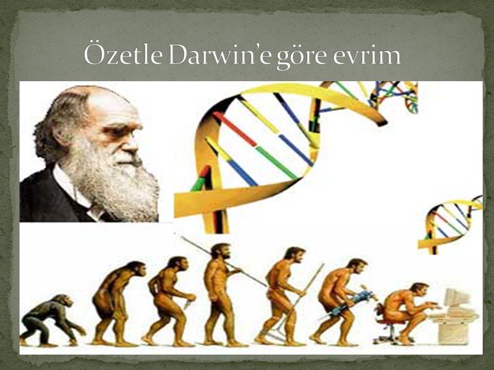 Özetle Darwin'e göre evrim