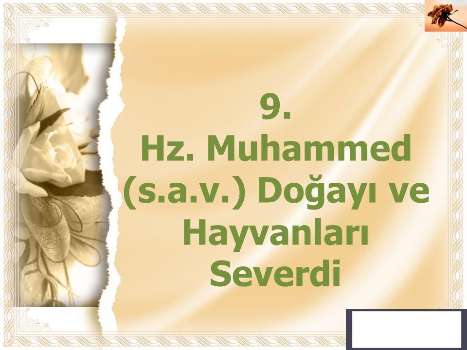 Hz. Muhammed (s.a.v.) Doğayı ve Hayvanları Severdi