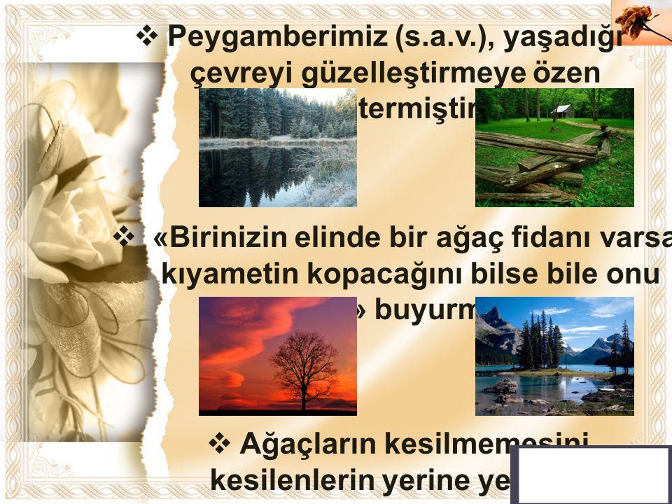 Peygamberimiz (s.a.v.), yaşadığı çevreyi güzelleştirmeye özen göstermiştir.
