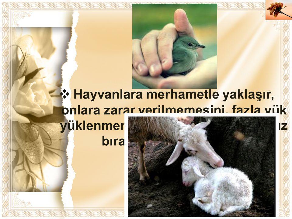 Hayvanlara merhametle yaklaşır, onlara zarar verilmemesini, fazla yük yüklenmemesini, onların aç ve susuz bırakılmamasını isterdi.