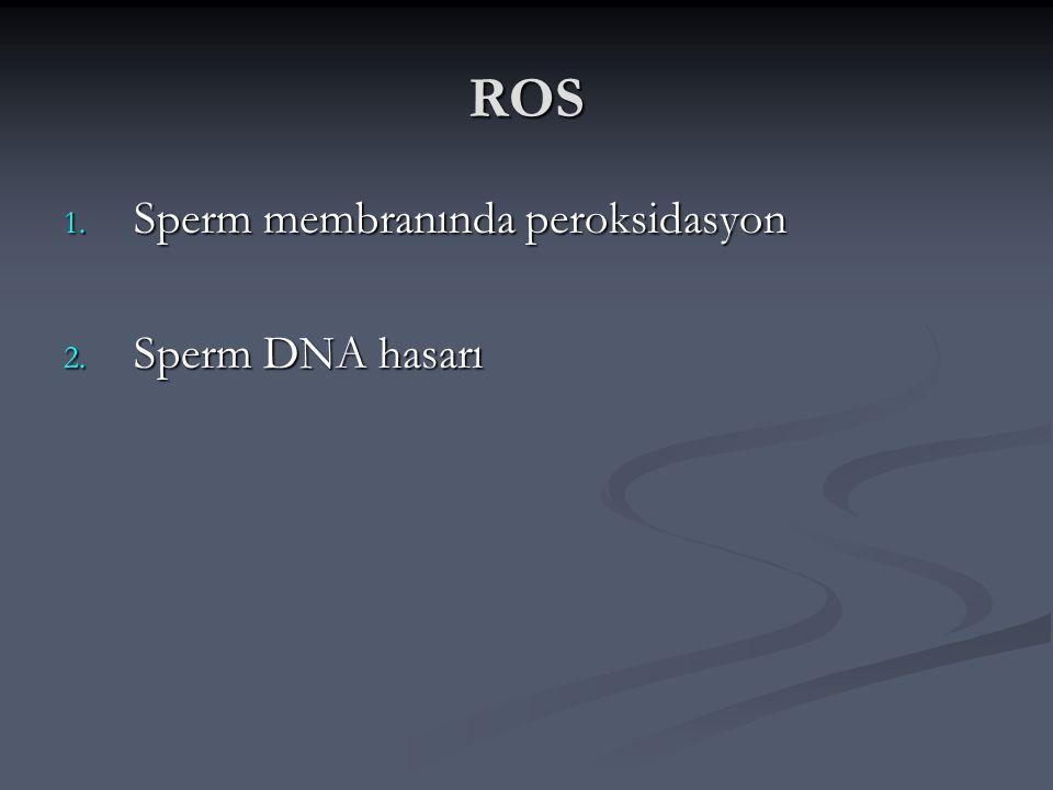 ROS Sperm membranında peroksidasyon Sperm DNA hasarı