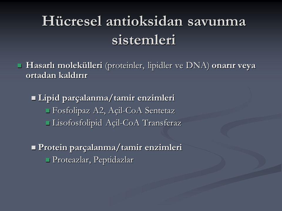 Hücresel antioksidan savunma sistemleri