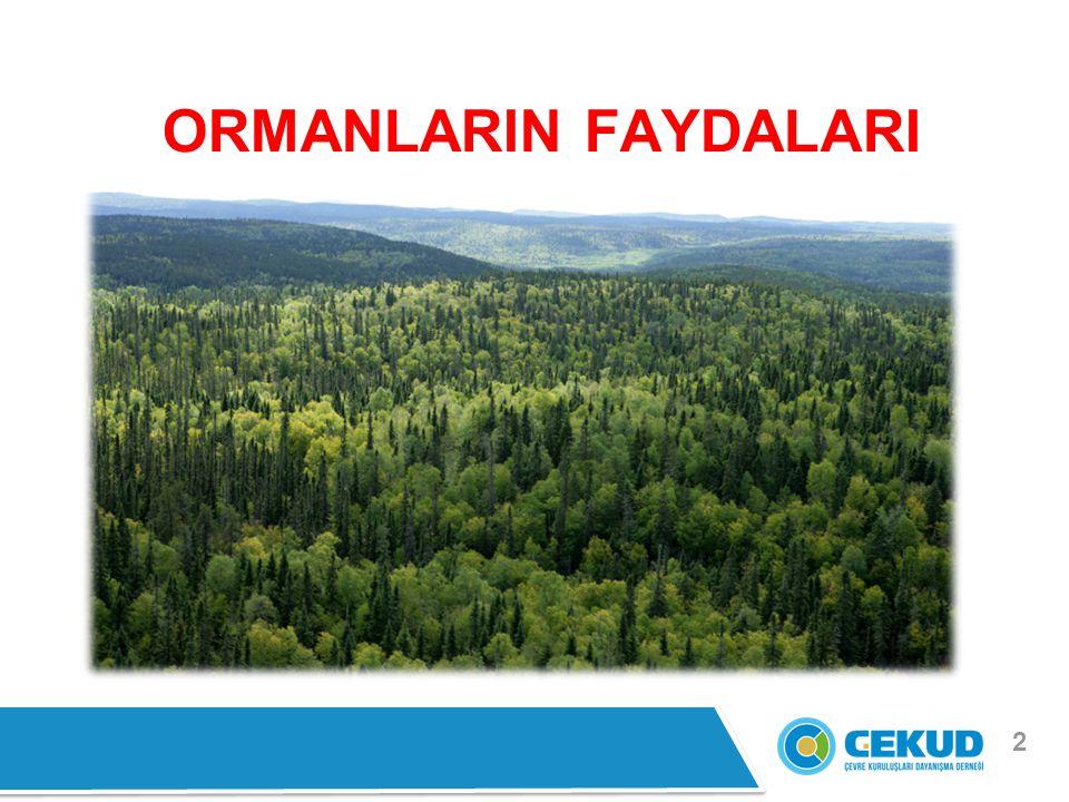 ORMANLARIN FAYDALARI