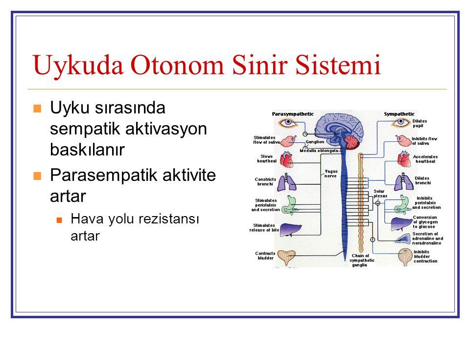 Uykuda Otonom Sinir Sistemi