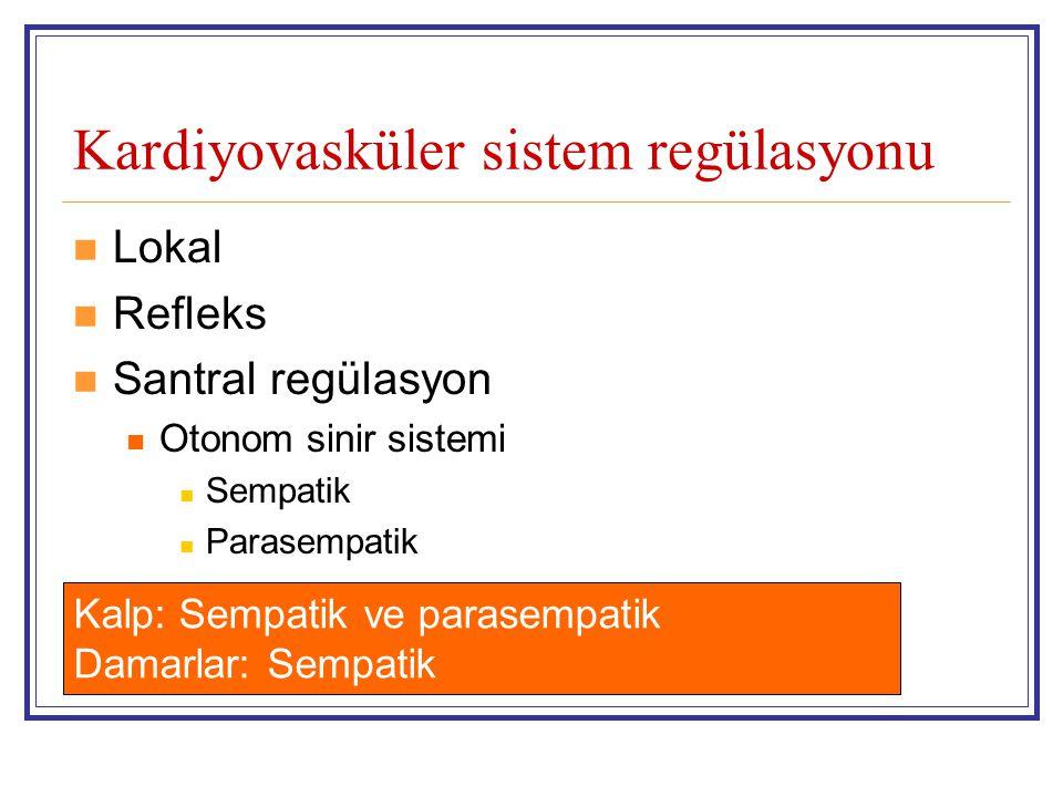 Kardiyovasküler sistem regülasyonu