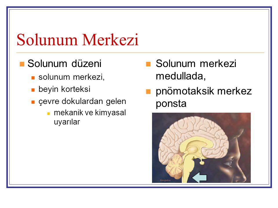 Solunum Merkezi Solunum düzeni Solunum merkezi medullada,