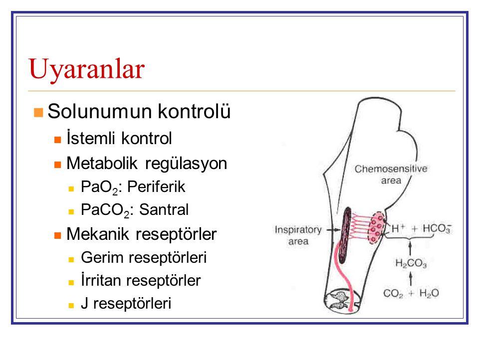 Uyaranlar Solunumun kontrolü İstemli kontrol Metabolik regülasyon