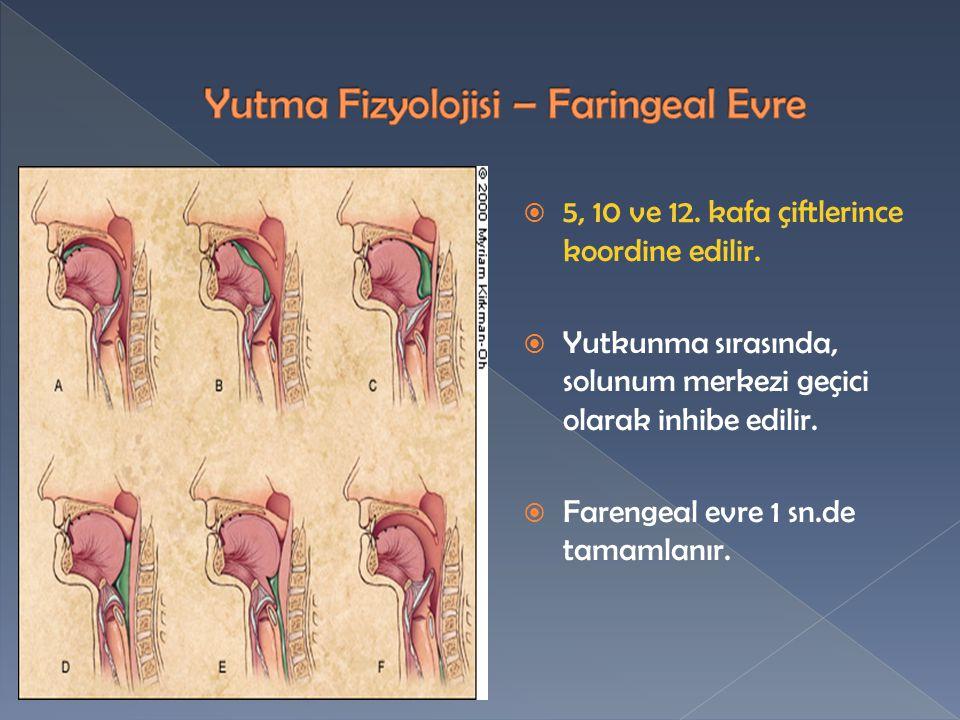 Yutma Fizyolojisi – Faringeal Evre