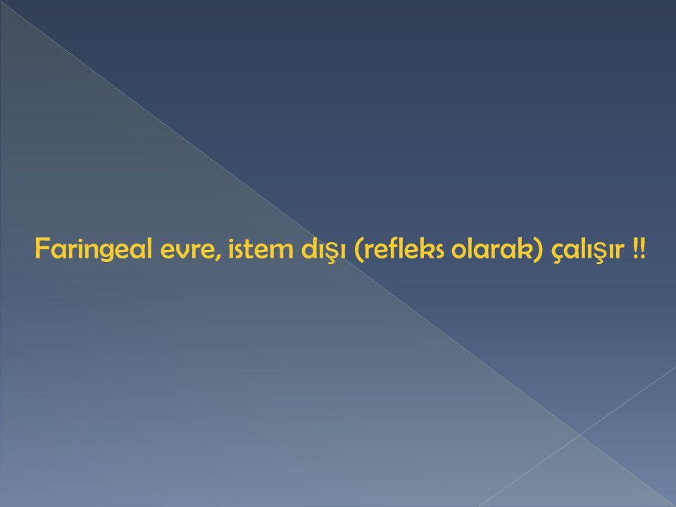 Faringeal evre, istem dışı (refleks olarak) çalışır !!