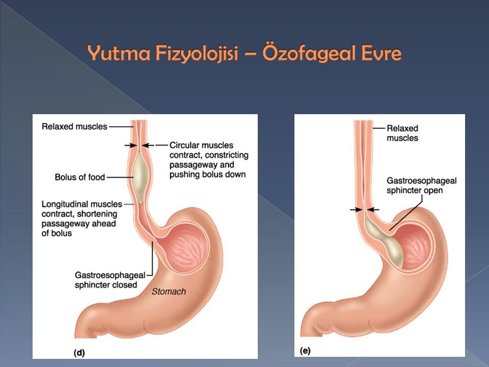 Yutma Fizyolojisi – Özofageal Evre