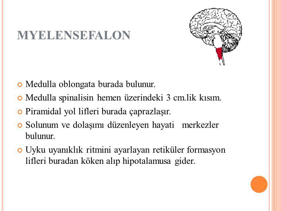 MYELENSEFALON Medulla oblongata burada bulunur.