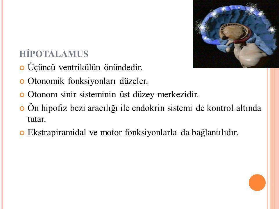 HİPOTALAMUS Üçüncü ventrikülün önündedir. Otonomik fonksiyonları düzeler. Otonom sinir sisteminin üst düzey merkezidir.