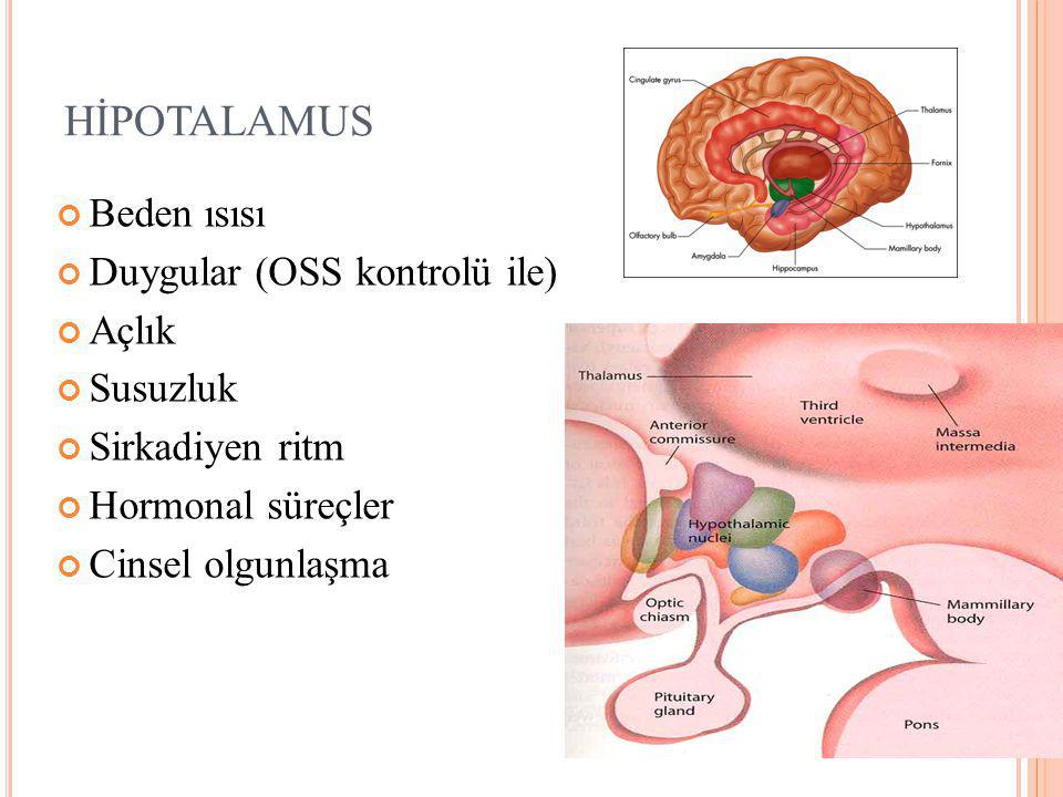 HİPOTALAMUS Beden ısısı Duygular (OSS kontrolü ile) Açlık Susuzluk