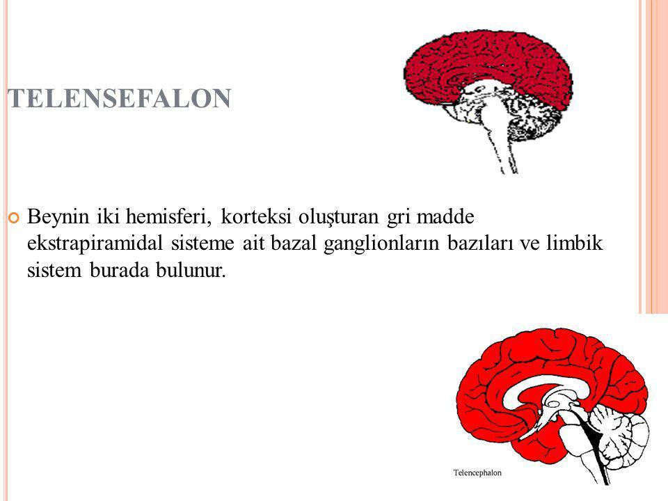 TELENSEFALON