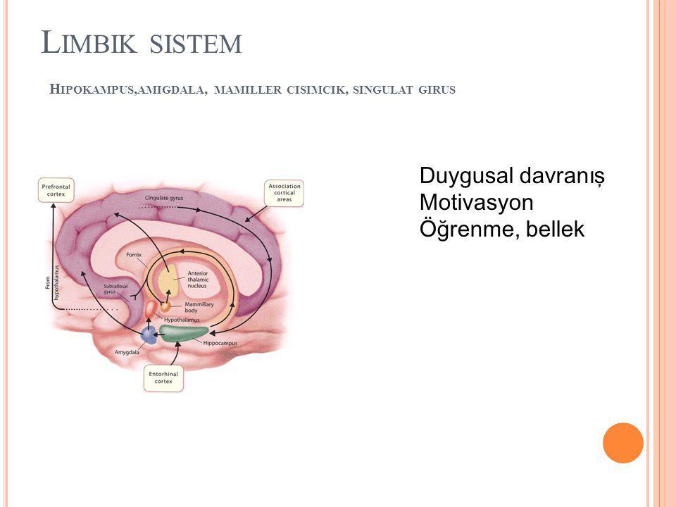 Limbik sistem Hipokampus,amigdala, mamiller cisimcik, singulat girus