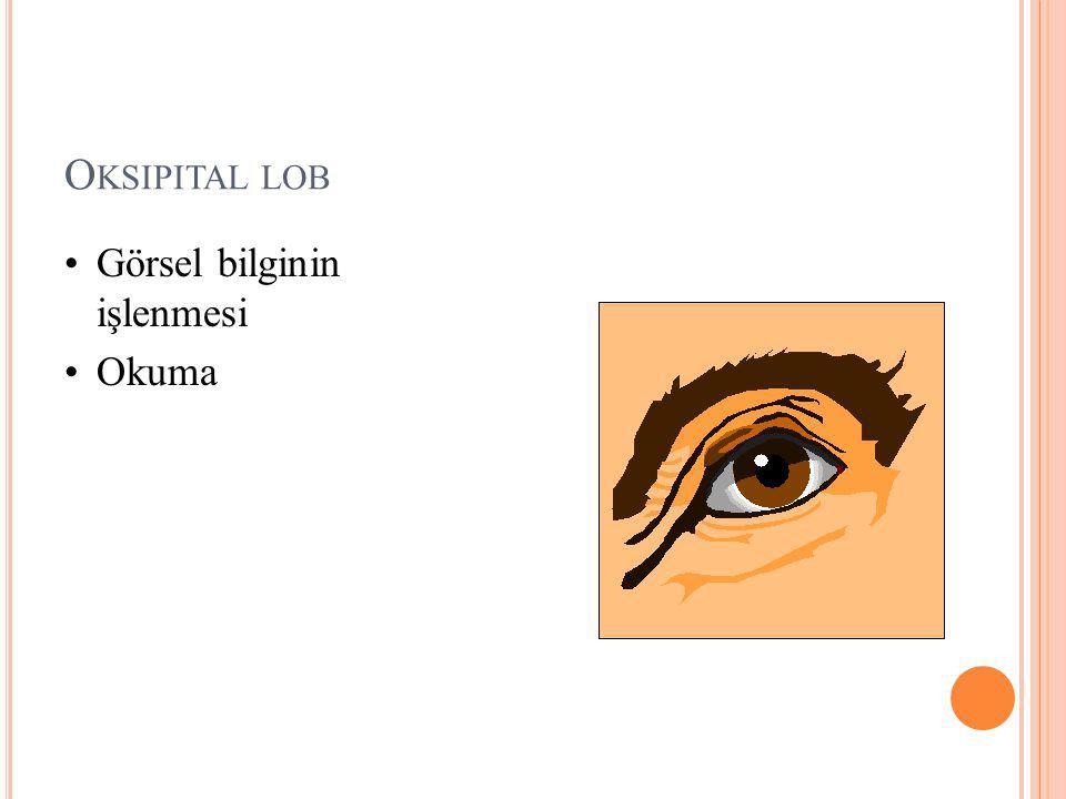 Oksipital lob Görsel bilginin işlenmesi Okuma