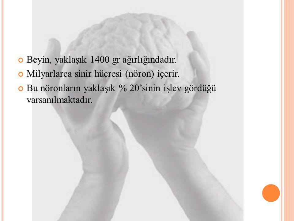 Beyin, yaklaşık 1400 gr ağırlığındadır.